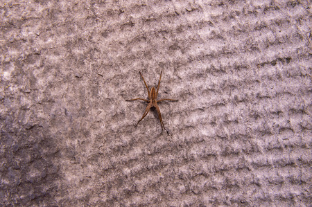 Texture - the spider sits in the center of the slate sheet, there is a place to fill 写真素材