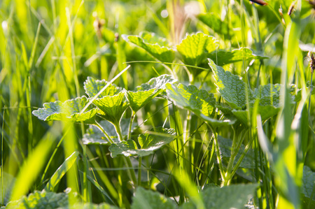 Green covering of meadows and fields soil - earth day Stock Photo