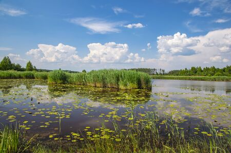 Natural landscape - forest lake with white lilies against the blue sky