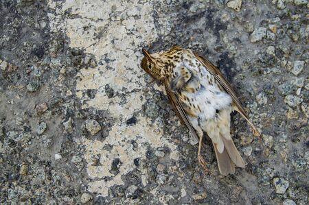 Bird dead on the road lies. Environment.