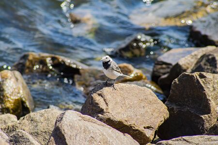 Little bird on the stones near the water. Natural background. Stock Photo