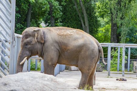 Big elephant in the aviary of the zoo. Animal world.