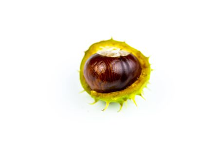 Chestnut fruit on a white background. Place for text.
