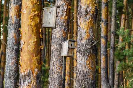 Bird feeders on a pine tree in the forest. Environment.