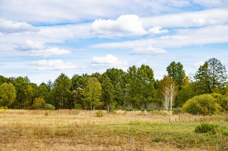Cloudy horizon on the forest. Natural landscape. Background.