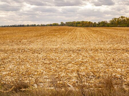 Mowed corn field after harvesting. Cloud horizon. Agriculture. Stock Photo