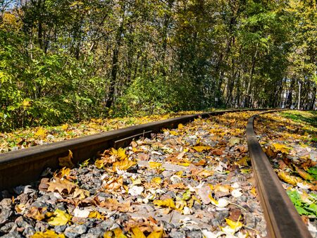 Old railway rails in autumn foliage. Transport.