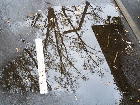 Puddle with reflection of a tree on the road. Weather.