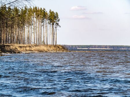 Water horizon with a pine shore against a blue cloudy sky. Natural background. A place for fishing. Background image. Place for text. Landscape. Sunny day. Blue sky.