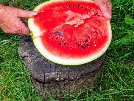 A red watermelon is cut with a knife. Berry. Food photo. Place for your text. Harvest of watermelons. Background image. Poster. Advertising photo of a shop window. Summer season. Fruits.