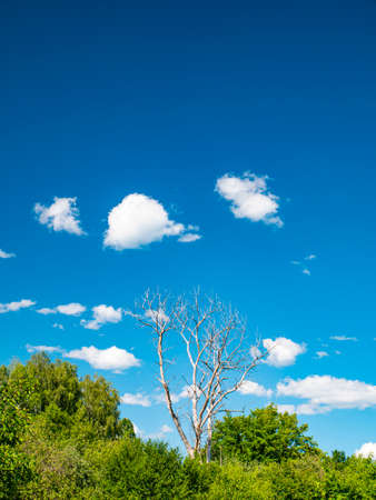 Dry wood on a background of blue sky with white clouds. Cloudy landscape. Background image. Place for text. Template. Poster. Look into the distance. Admire the view. Prodny landscape. Cloudy horizon. Stock fotó