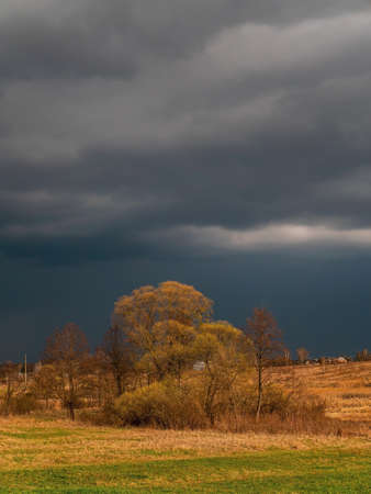 Trees against the background of a thundercloud. Cloudy horizon. The sky is in thunderclouds. Gloomy sky. A hurricane is approaching. Natural cyclone. The storm is approaching. Weather forecast.