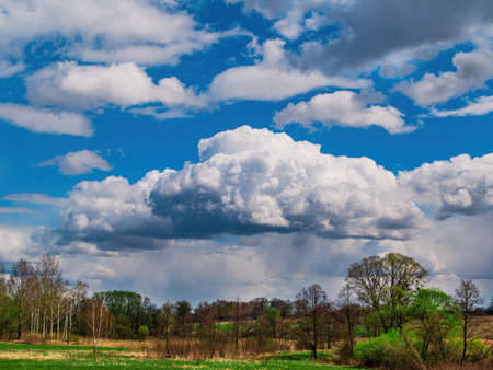 Forest horizon against a blue sky with white clouds. Stock fotó
