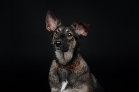 portrait of a mixed breed dog on the dlack background