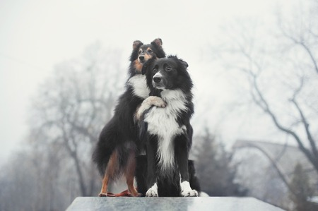 two dogs standing and hugging each other Stock Photo