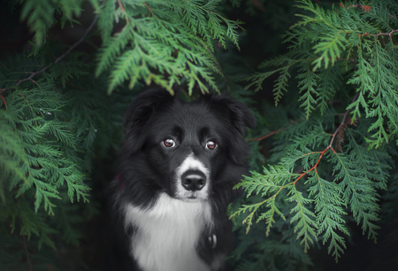 portrait of border collie in green plants