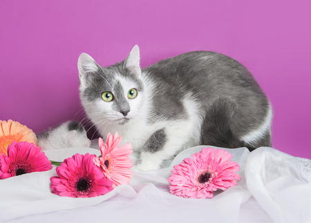white and gray cat with kitten and flowers on the white and pink background