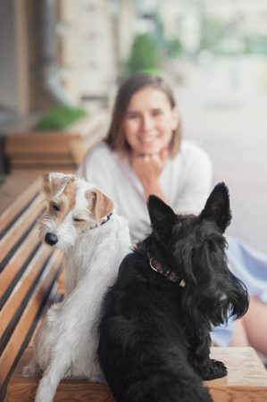 A blurred girl smiles at two terrier dogs, who are looking into the camera.