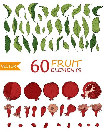 Set of 60 Pomegranate elements, flowers and leaves. Hand drawn fruit style. Hand drawn fruit style. Design for cosmetics, spa, pomegranate juice, health care products, perfume. Ilustracja