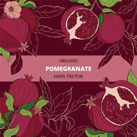 banners with pomegranate fruits on burgundy background. Design for cosmetics, spa, pomegranate juice, health care products, perfume. Can be used as dessert menu or farmers shop background - illustration