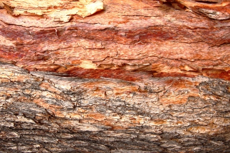 fading: Red Fading Bark