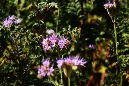 Two Bees Фото со стока