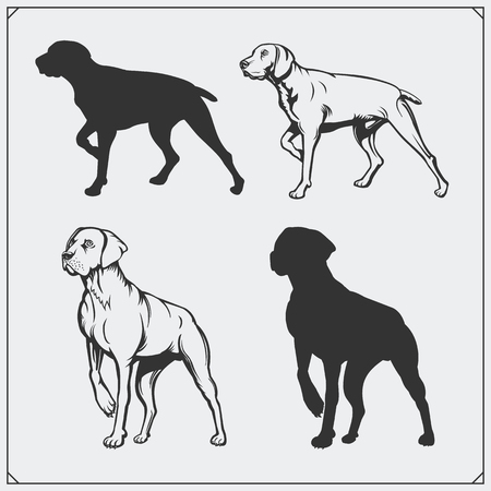 Illustrations and silhouettes of dogs. Black and white design. Illustration