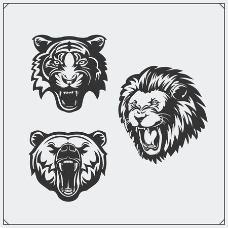 Illustrations of wild animals. Bear, lion and tiger.