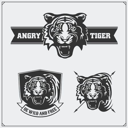 Labels, emblems and design elements for sport club with tiger head.
