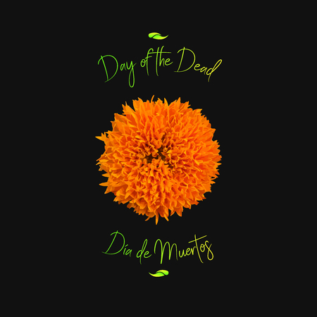 Day of the Dead aka Día de Muertos illustration based on Marigold flower.