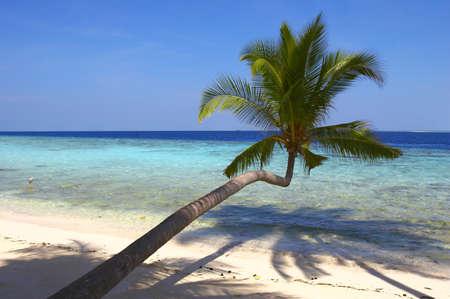 BEAUTIFUL BEACH WITH PALM TREE IN INDIAN OCEAN, MALDIVE ISLAND, FILITEYO