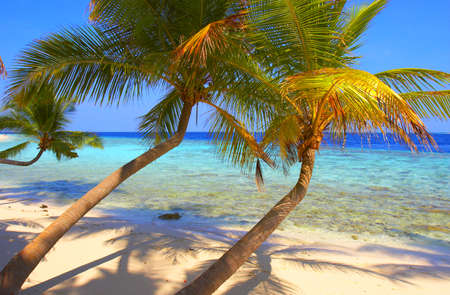BEAUTIFUL BEACH WITH PALM TREE IN INDIAN OCEAN, MALDIVE ISLAND, FILITEYO Stock Photo - 1385377