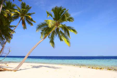 BEAUTIFUL BEACH WITH PALM TREES IN INDIAN OCEAN, MALDIVE ISLAND, FILITEYO Stock Photo - 1385369