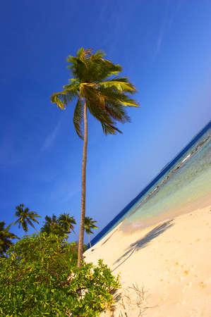 BEAUTIFUL BEACH WITH PALM TREE IN INDIAN OCEAN, MALDIVE ISLAND, FILITEYO Stock Photo - 1385366