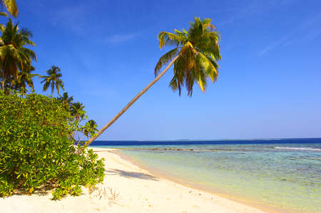 BEAUTIFUL BEACH WITH PALM TREE IN INDIAN OCEAN, MALDIVE ISLAND, FILITEYO Stock Photo - 1385374