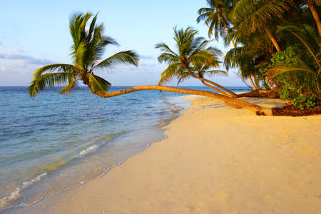 UNIQUE  SUNSET BEACH WITH PALM TREES IN INDIAN OCEAN, MALDIVE ISLAND, FILITEYO Stock Photo - 1385372