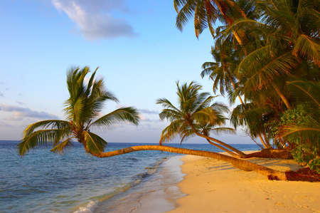 FANTASTIC SUNSET BEACH WITH PALM TREES IN INDIAN OCEAN, MALDIVE ISLAND, FILITEYO Stock Photo - 1385378