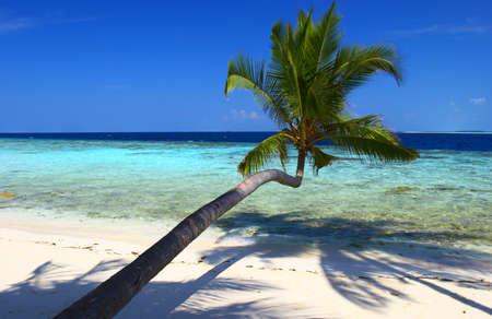 BEAUTIFUL BEACH WITH PALM TREE IN INDIAN OCEAN, MALDIVE ISLAND, FILITEYO Stock Photo - 1385370