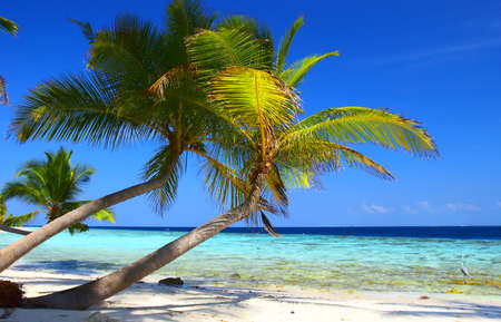 PHENOMENAL BEACH WITH PALM TREES IN INDIAN OCEAN, MALDIVE ISLAND, FILITEYO Stock Photo - 1385373