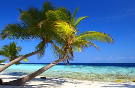 PHENOMENAL BEACH WITH PALM TREES IN INDIAN OCEAN, MALDIVE ISLAND, FILITEYO Stock Photo - 1385375