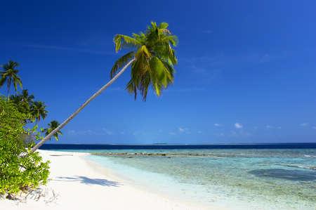 BEAUTIFUL BEACH WITH PALM TREE IN INDIAN OCEAN, MALDIVE ISLAND, FILITEYO Stock Photo - 1385365