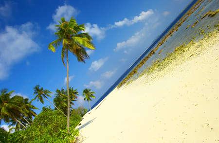 Dream Beach with Palm Trees In Indian Ocean, Maldive Island Filiteyo  Stock Photo - 1385363