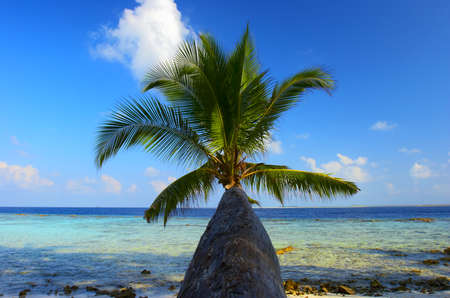 WONDERFUL BEACH WITH PALM TREE IN INDIAN OCEAN, MALDIVE ISLAND, FILITEYO Stock Photo - 1385367