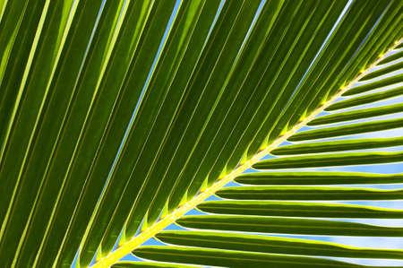 Palm tree leaf and the blue sky N53 Stock Photo - 3141197