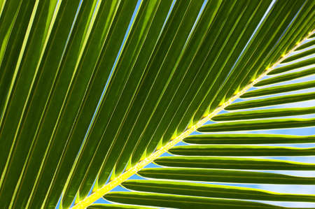 Palm tree leaf and the blue sky N53 Stock Photo - 3141197
