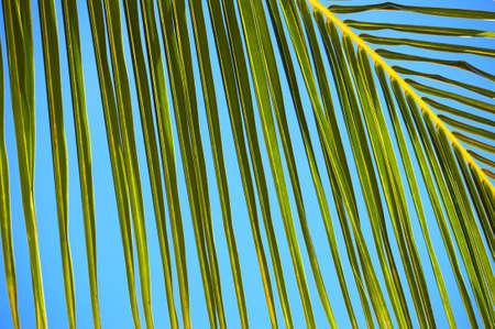 Palm tree leaf and the blue sky N512 photo