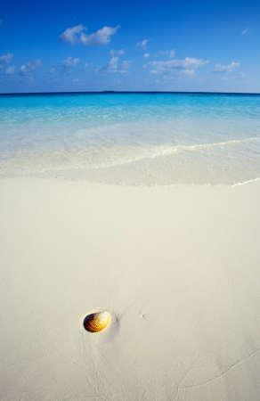 Small seashell is on a sandy beach Stock Photo - 12621830