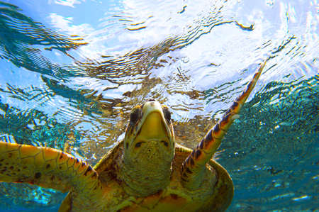 peery looking turtle Stock Photo