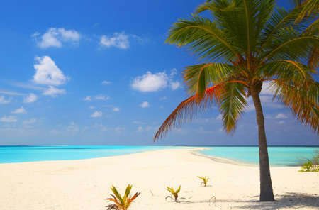 Tropical beach on the island Kuredu in the Indian Ocean, Maldives photo