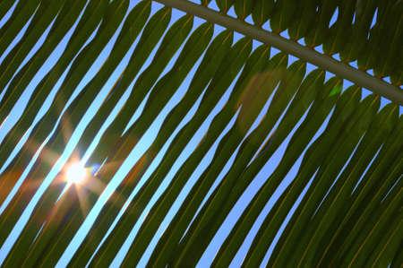 Palm tree leaf and the blue sky N59 photo